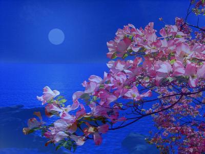 POEMAS SIDERALES ( Sol, Luna, Estrellas, Tierra, Naturaleza, Galaxias...) - Página 13 20111210232648-cerezoyluna
